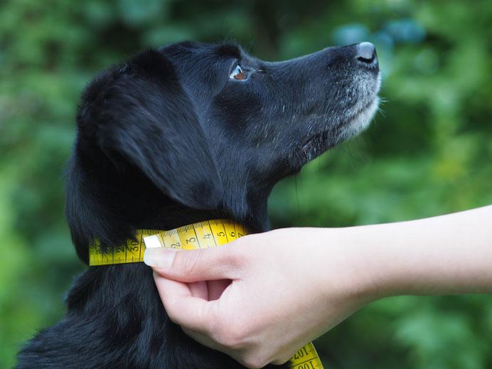 Halsumfang Messanleitung dogs-paracord