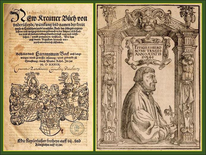 Hieronymus Bock 1498-1554, Theologe, Mediziner, Lehrer und Botaniker