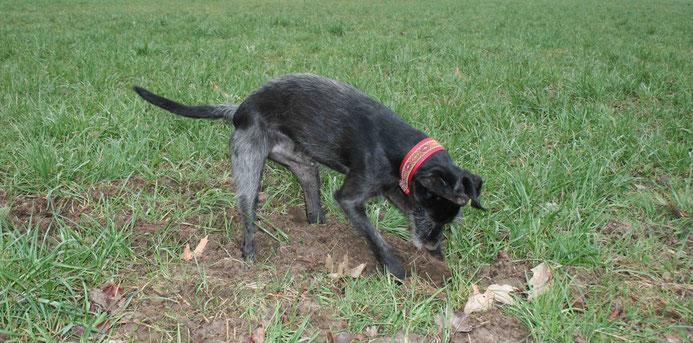 Zugstopp Halsband mit Borte Hund