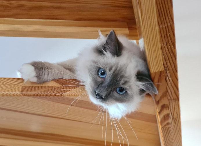 Vorsichtige Erkundung des Hauses - auf der Treppe hat man einen guten Überblick!