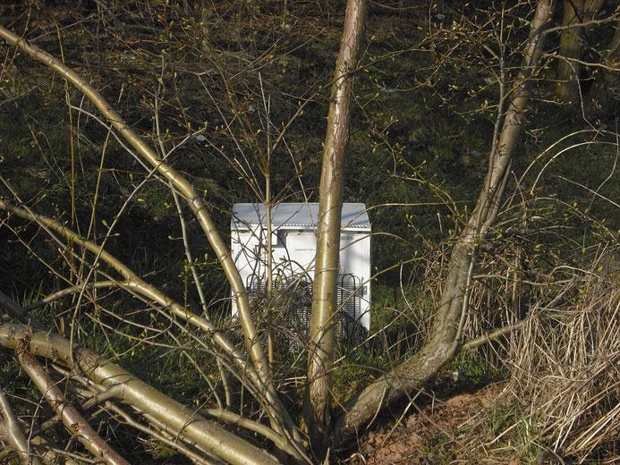Ein in einem Waldstück gesichteter alter Kühlschrank
