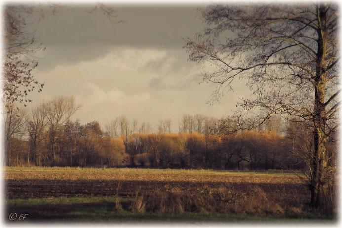 Winterliche Farben einer Landschaft