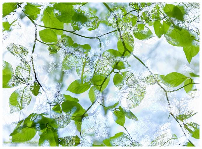 """""""Transparent"""" - Buchen und deren Blätter mit einer Doppelbelichtung kombiniert."""