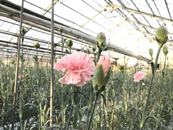 福岡市北崎の花ハウス