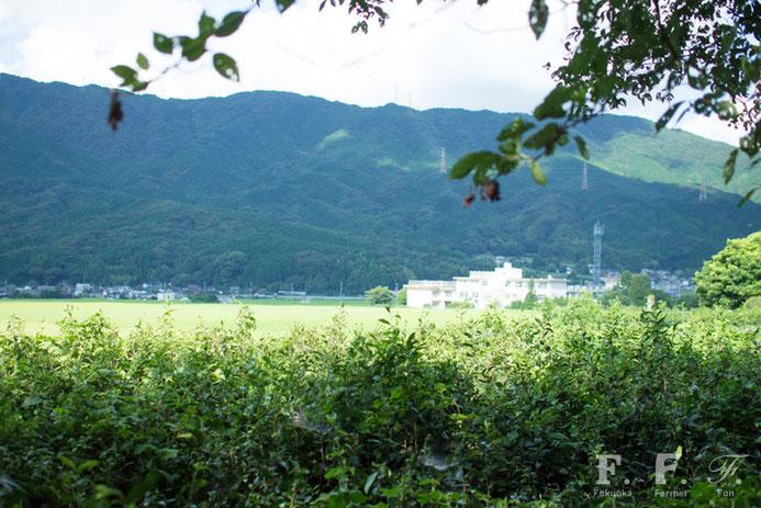 脇山中央公園から見る脇山小学校は、山々と田畑に囲まれた自然豊かな環境
