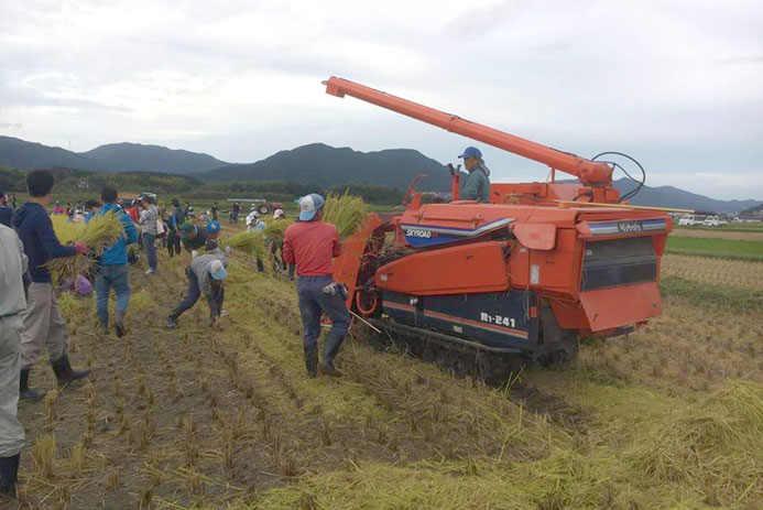 福岡市早良区脇山での稲刈り体験の様子