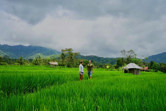 Reisfeld, Sidemen, Bali