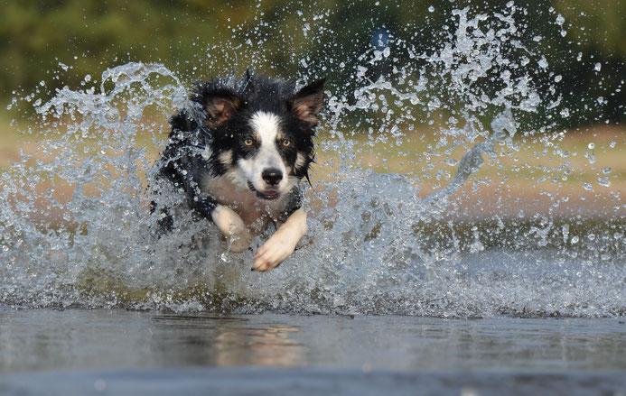 CBD PET Öl für Hunde von HempMate