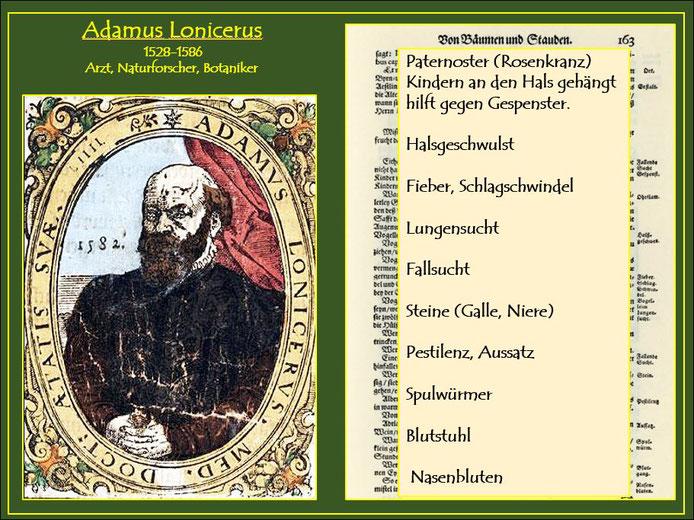 Auflistung über die Verwendungsmöglichkeiten der Mistel im Kräuterbuch von Adamus Lonicerus