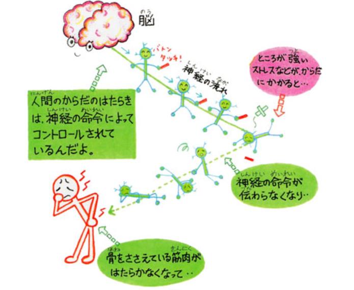 人間のからだの働きは、神経の命令によってコントロールされている