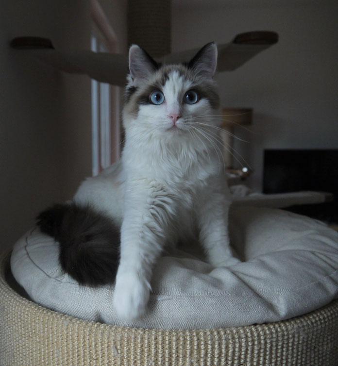 Quiana mit 7 Monaten