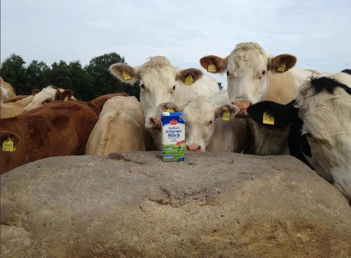Kühe auf der Weide, Tetrapack, Milch, Holvede