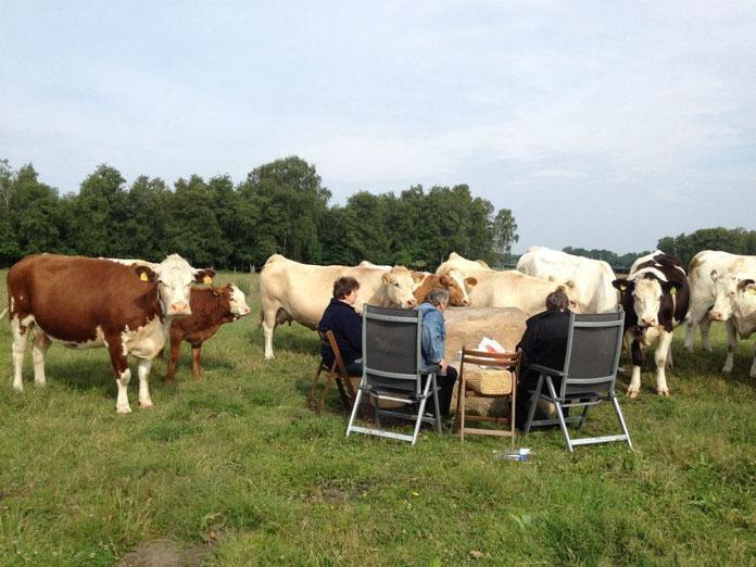 Kühe auf der Weide, Wilfried Durchholz, Erika Sievers
