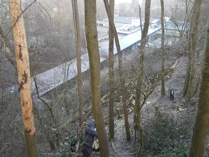 Die Bäume hinter der 90m-Scheibe unterhalb des Parcours wurden am Dienstag gefällt. Fotos: Jürgen Kaupp