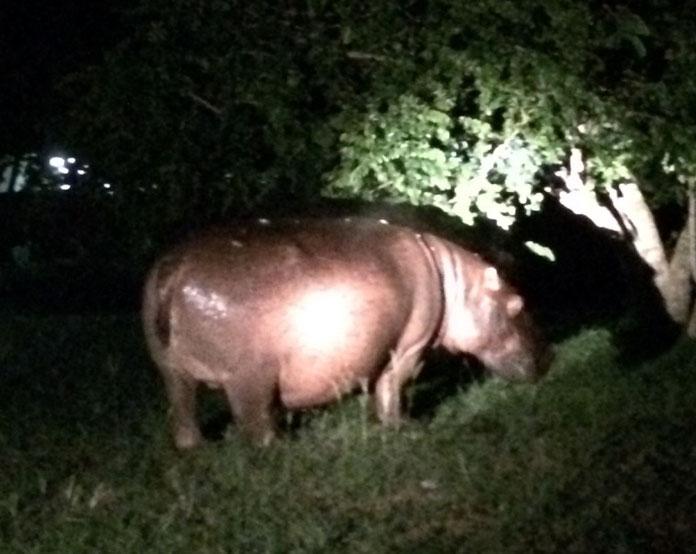 Weltreise Reiseblog Südafrika St. Lucia iSimangaliso Wetland Nationalpark Turtels Night Safari