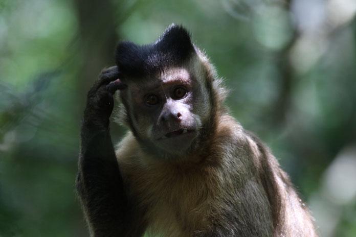 Affe wundert sich