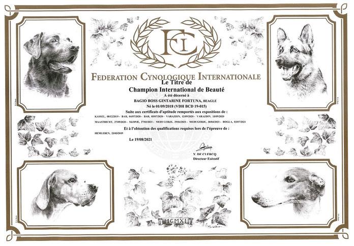 Bagio Boss Gintarine Fortuna * Lord James *, Czarnowsky , Beagle, Beagle, Beagle, Beagle, Beagle, Champions, Winner, the Best, Love, Star