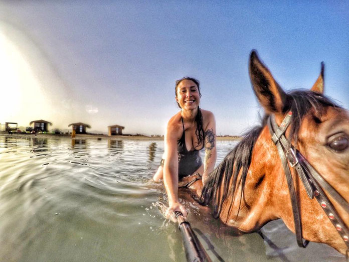 swim with horses in Egypt