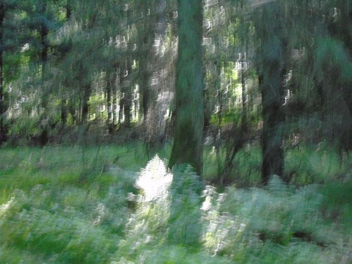 Ein Farn in der ätherischen Welt, Quelle: www.lichtwesenfotografie.com