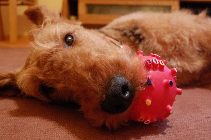愛犬デール