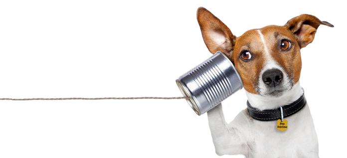 Contactez dogs-solutions educateur canin  et comportementaliste sur paris et IDF