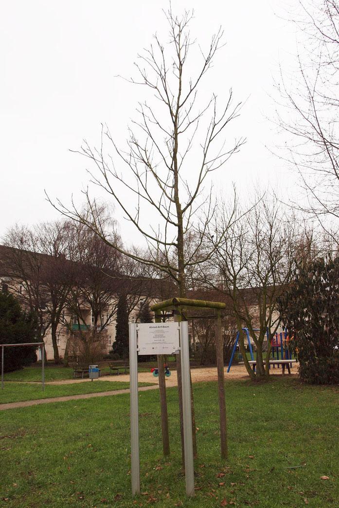 Gedenkbaum, Foto vom 10.02.2015