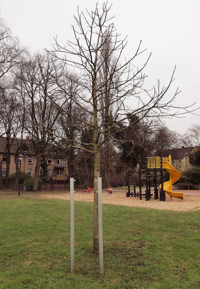 Vandalismus, die Gedenktafel wurde abgerissen. Foto vom 10.02.2015