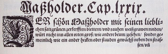 Quelle: Kreutterbuch 1577 Hieronmus Bock