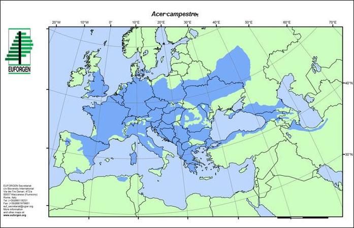 Quelle: Distrubition map of Field maple (Acer campestre) EUFORGEN 2009, www.euforgen.org