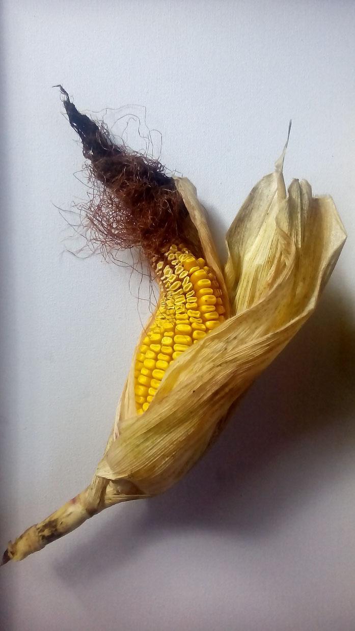 Barbe de maïs