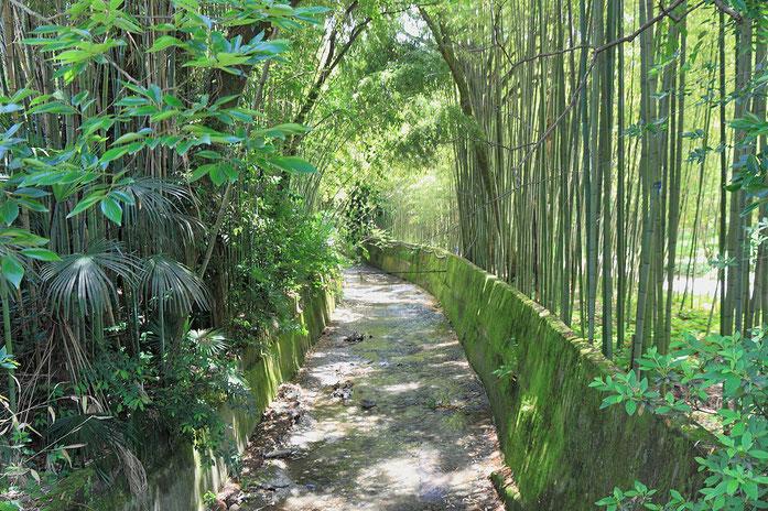«2014 Suchum, Ogród botaniczny (23)» par Photo: Hons084 / Wikimedia Commons. Sous licence CC BY-SA 4.0 via Wikimedia Commons - https://commons.wikimedia.org/wiki/File:2014_Suchum,_Ogr%C3%B3d_botaniczny_(23).jpg#/media/File:2014_Suchum,_Ogr%C3%B3d_botani