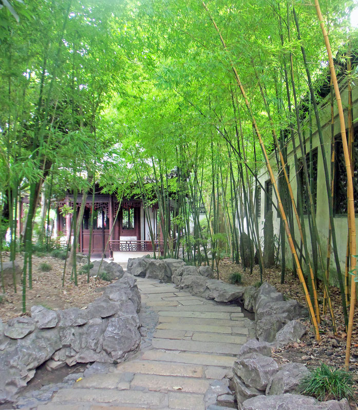 « Bamboo grove at Yuyuan Gardens » par Daniel Case — Travail personnel. Sous licence CC BY-SA 3.0 via Wikimedia Commons - https://commons.wikimedia.org/wiki/File:Bamboo_grove_at_Yuyuan_Gardens.jpg#/media/File:Bamboo_grove_at_Yuyuan_Gardens.jpg