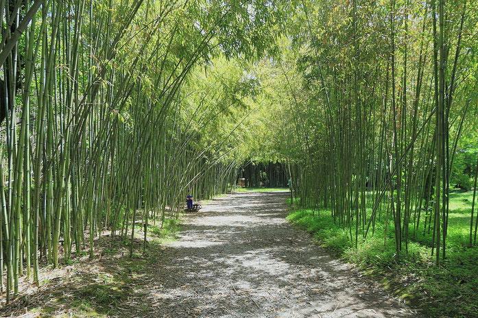«2014 Suchum, Ogród botaniczny (27)» par Photo: Hons084 / Wikimedia Commons. Sous licence CC BY-SA 4.0 via Wikimedia Commons - https://commons.wikimedia.org/wiki/File:2014_Suchum,_Ogr%C3%B3d_botaniczny_(27).jpg#/media/File:2014_Suchum,_Ogr%C3%B3d_botani