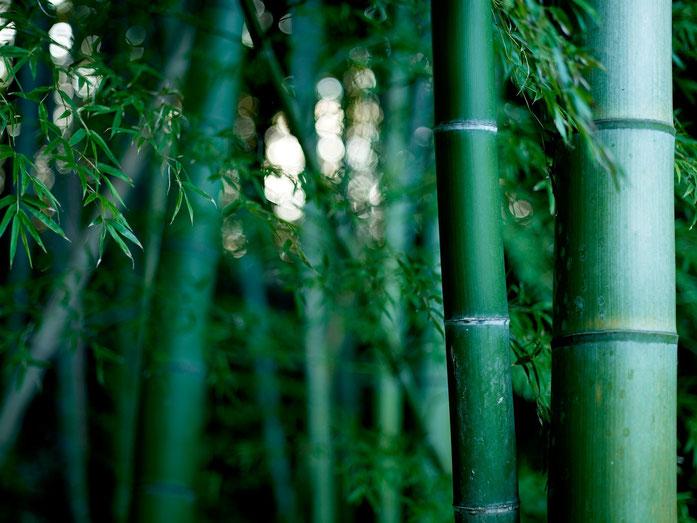 """BambooJI1"" babaen ni Joi - Bukod nga obra. Nalisensian babaen ti CC BY 3.0 babaen ti Wikimedia Commons - https://commons.wikimedia.org/wiki/File:BambooJI1.jpg#/media/File:BambooJI1.jpg"