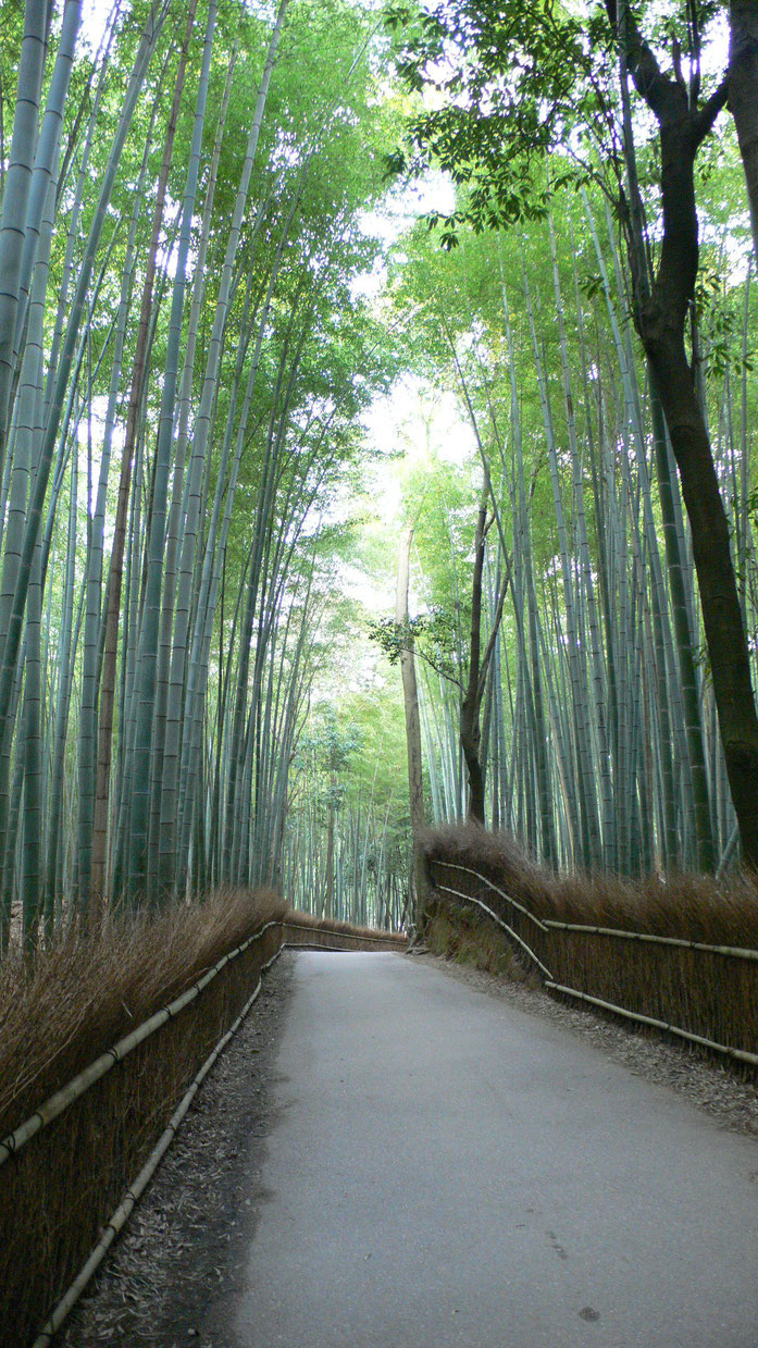 """Sagano Bamboo Forest 01"" naudotojo I, Mytho88. Licencijuotas kaip CC BY-SA 3.0 iš Wikimedia Commons - https://commons.wikimedia.org/wiki/File:Sagano_Bamboo_Forest_01.jpg#/media/File:Sagano_Bamboo_Forest_01.jpg svetainės"