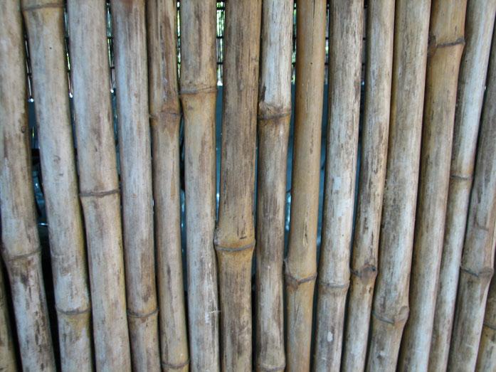 BU211F073_«Bamboobunch» par Iramuthusamy — Travail personnel. Sous licence CC BY-SA 3.0 via Wikimedia Commons - https://commons.wikimedia.org/wiki/File:Bamboobunch.JPG#/media/File:Bamboobunch.JPG