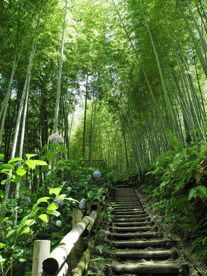 pdp Route en bambou eludis par santa delux Share