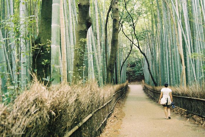 Bambouseraie d'Arashiyama : La forêt de bambous de Sagano à Kyoto , chemin à travers les bambous géants, forêt de jade