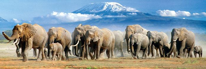 Kenya. Parco Nazionale Amboseli
