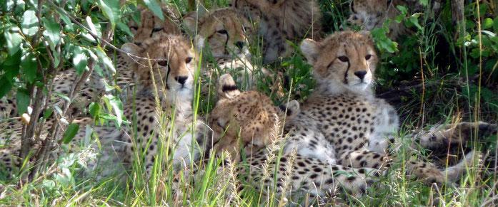 Riserva Masai Mara