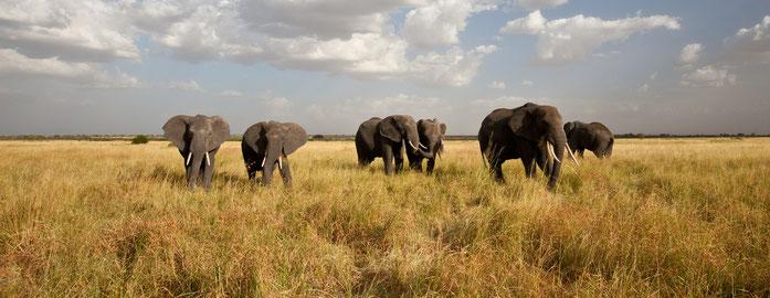 Piana del Serengeti