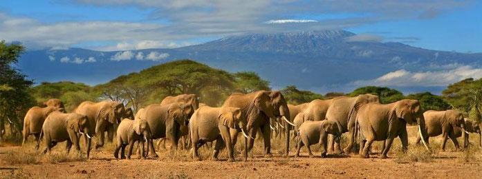 Parco Nazionale Amboseli