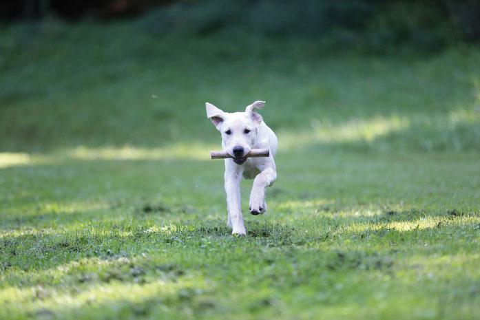 Bild: Jagdhundewesen -Vorbereitung auf die Aufsichtsjägerprüfung