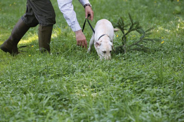Bild: Jagdhundeausbildung - Schweißarbeit - bei der praktischen Ausbildung der Jäger ein Teil unseres Jagdkursprogrammes