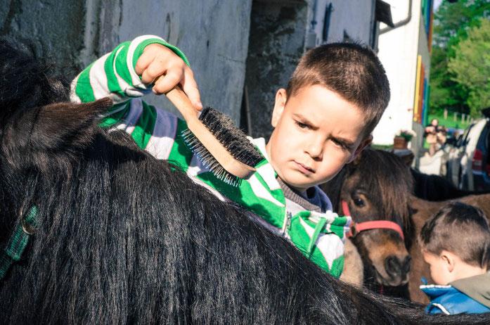 Das Thema Pony am lebendigen Tier bearbeiten in einer Schul Exkursion der speziellen Art.Die Kinder lernen alles Wissenswerte und was sie wissen möchten über Pferde und Ponys. Dabei können die Ponys und Pferde gestreichelt, geputzt und geritten werden.