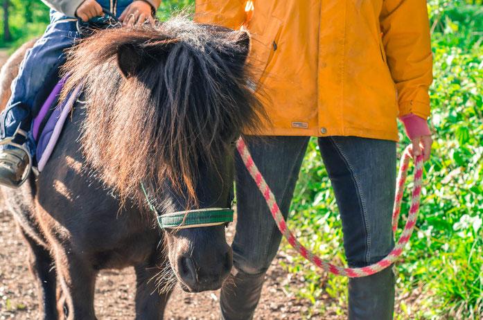 Ponyreiten, MUKI Reiten, sowie Reittherapie und Reitunterricht werden mit unseren freundlichen, knuddligen Ponys und Pferden durchgeführt. Die Ponys und Pferde leben tiergerecht in Offenställen und sind damit ausgeglichen für das Ponyreiten und mit Kinder