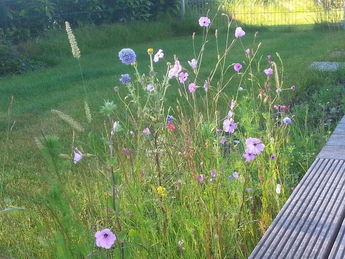 Wildblumenwiese - ich mag es wild...