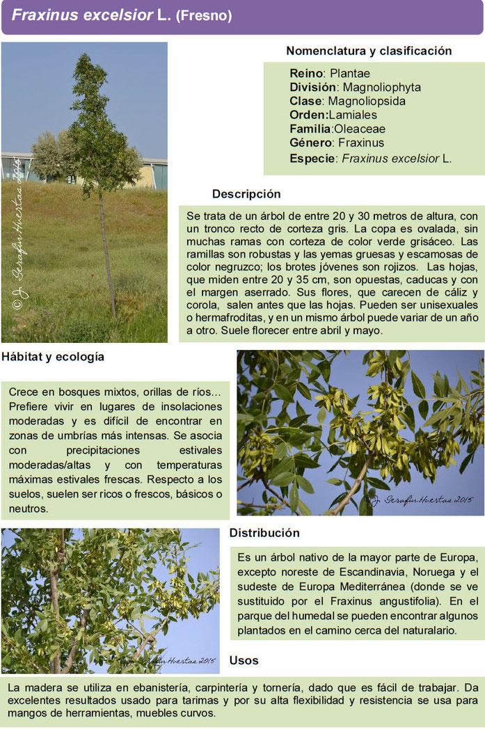Bosque del Humedal, Asociación de Vecinos Barrio del Puerto, Coslada