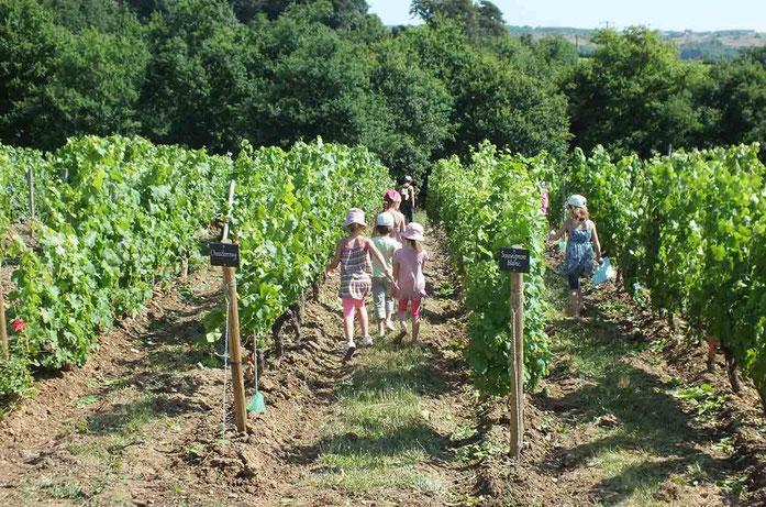 Ateliers découverte de la vigne et du vin