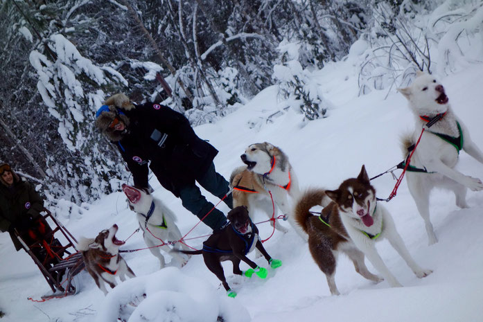 Greenlanddogs sledtour at the Arctic Circle in Sweden, Jokkmokk